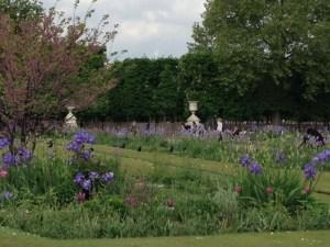 Tuileries tulips