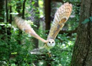 Willow in flight 2