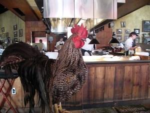 Big Rooster