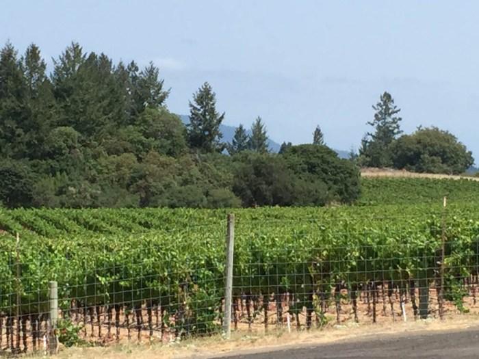 Dutton-Goldfield Winery