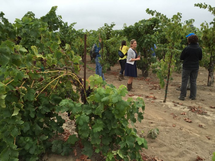 Dutton-Goldfield Winery tour