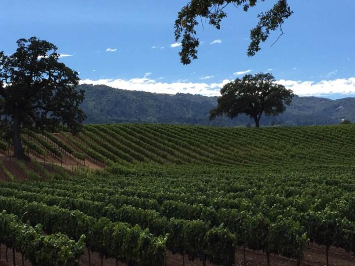 B. R. Cohn winery