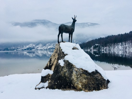 things to do in lake bohinj