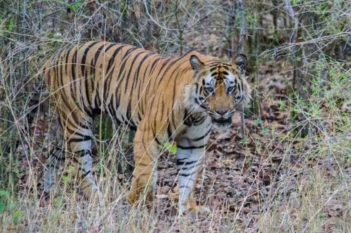 The Best Places to Spot a Tiger in India