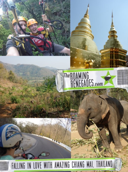 A guide to Chiang Mai: The amazing and adventure filled Thai city that instantly felt like home, Chiang Mai things to do, Doi Suthep, views, Elephants, elephant trekking, Elephant no riding, Elephant sanctuary, zipline, zip lining, jungle, gibbons, flight of the gibbon, temples, hiking, homestay, trekking, rent a scooter, rent a motorbike, pai, how to get to Pai from Chiang Mai, Mekong slow boat, Laos, Chiang Rai, Wat Suan Dok, Wat Pan Tao, Wat Pansao, Wat Lok Malee, Wat Sri Suphan, Wat Chiang Man, Wat Jet Yot, pad Thai, vegetarian food, markets, night market, Chiang Mai guide, what to do in Chiang Mai, Bangkok to Chiang Mai,
