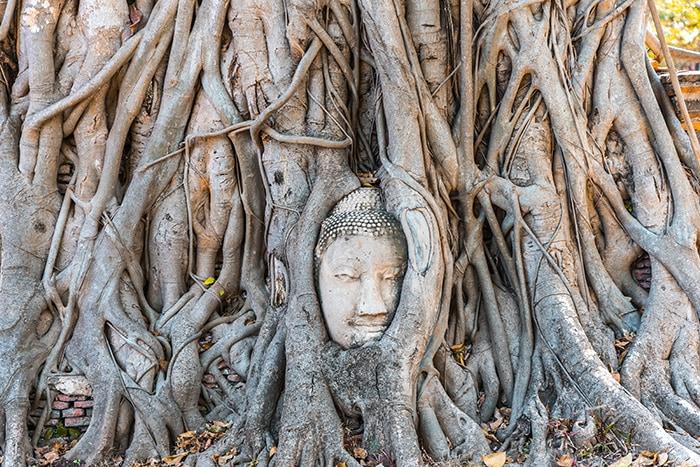 Buddha head in tree, Ayutthaya day trip from Bangkok, Ayutthaya tour from Bangkok, Getting to Ayutthaya from Bangkok, Ayutthaya day tour from Bangkok, bus Bangkok to Ayutthaya, train Bangkok to Ayutthaya, how to get to Ayutthaya from Bangkok by train, day trip to Ayutthaya from Bangkok, Bangkok to Ayutthaya train, best day trip from Bangkok, Ayutthaya Day Trip From Bangkok, Thailand