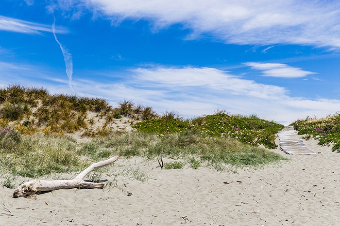 Dunes in New Brighton Beach, (day trips from Christchurch, Christchurch day trips, places to visit near Christchurch, things to do in Canterbury New Zealand, visit Christchurch)