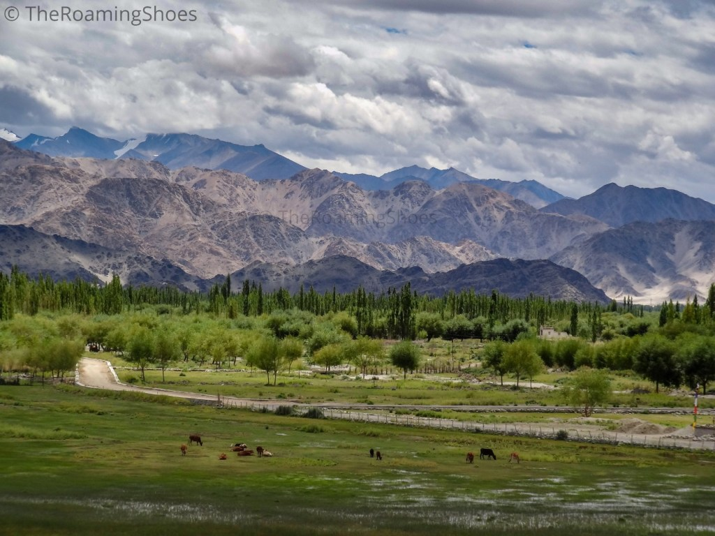 View from Shey Palace, Leh