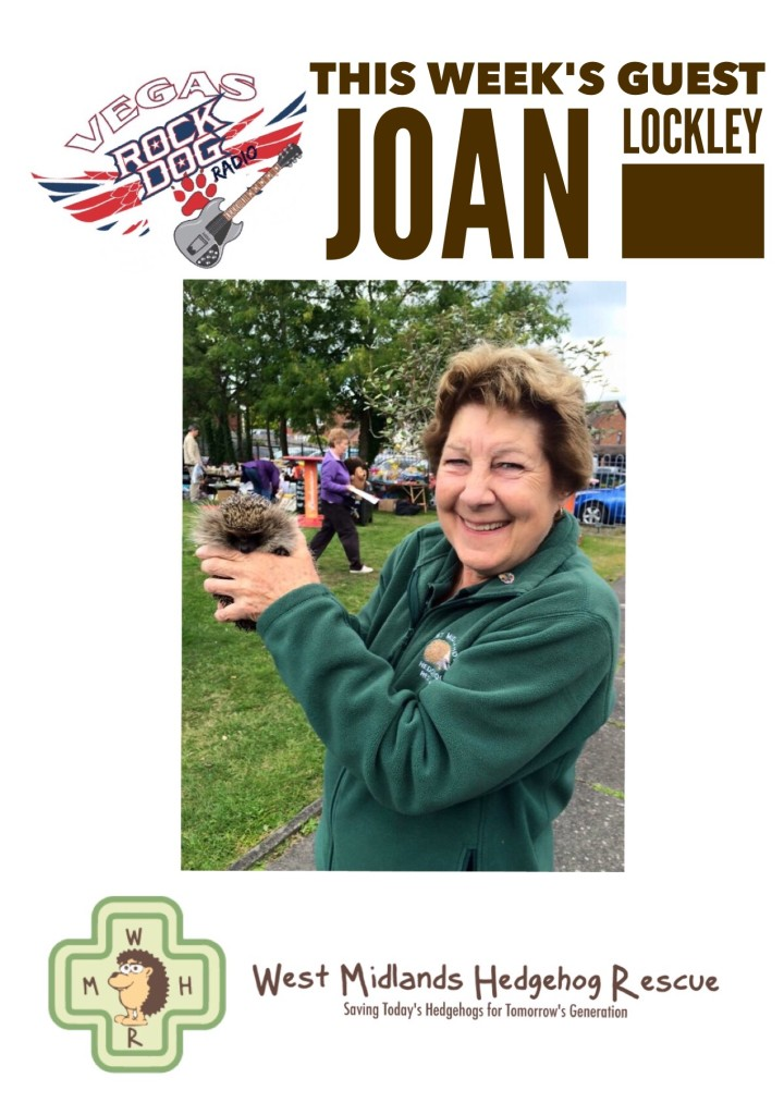 Joan Lockley of the West Midlands Hedgehog Rescue