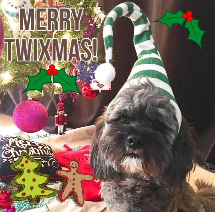 Mr. Twix Spruces Up For Santa Paws #PetSmartGrooming