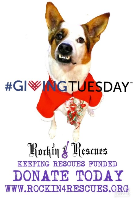 #givingtuesday Rockin 4 Rescues Donate today and help us save more dogs and cats
