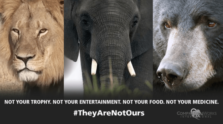 Worldwide Rally Cecil #theyarenotours