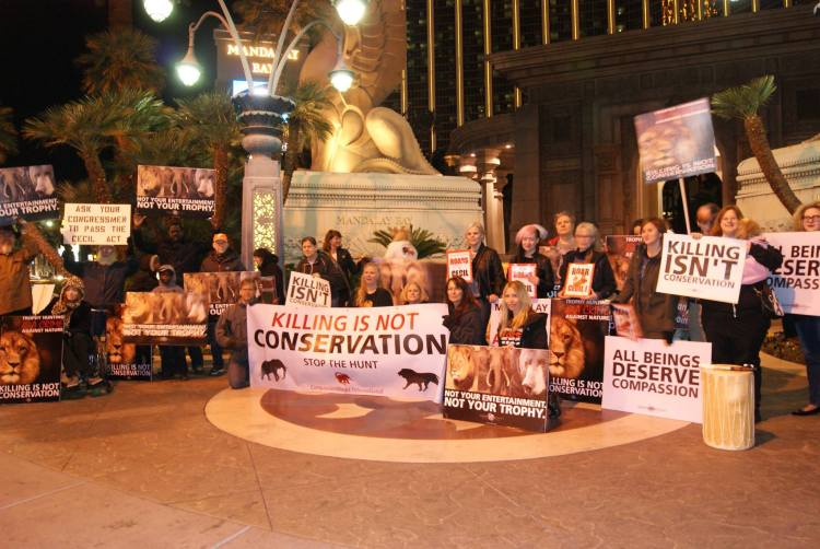 Worldwide Rally Cecil ~ Mandalay Bay Hotel Las Vegas. Together we are their voice...and we ROAR for Cecil and all animals brutally murdered for selfishness and greed!