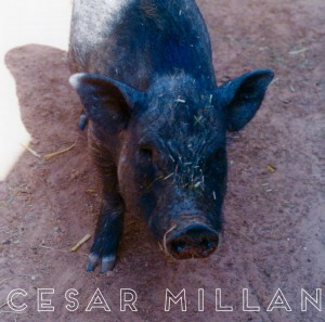 Cesar Millan Under Investigation