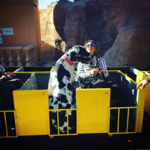 A magical day at Santa Paws. Great Dane on the train at Opportunity Village