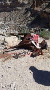 Havasupai pack animal abuse Grand Canyon