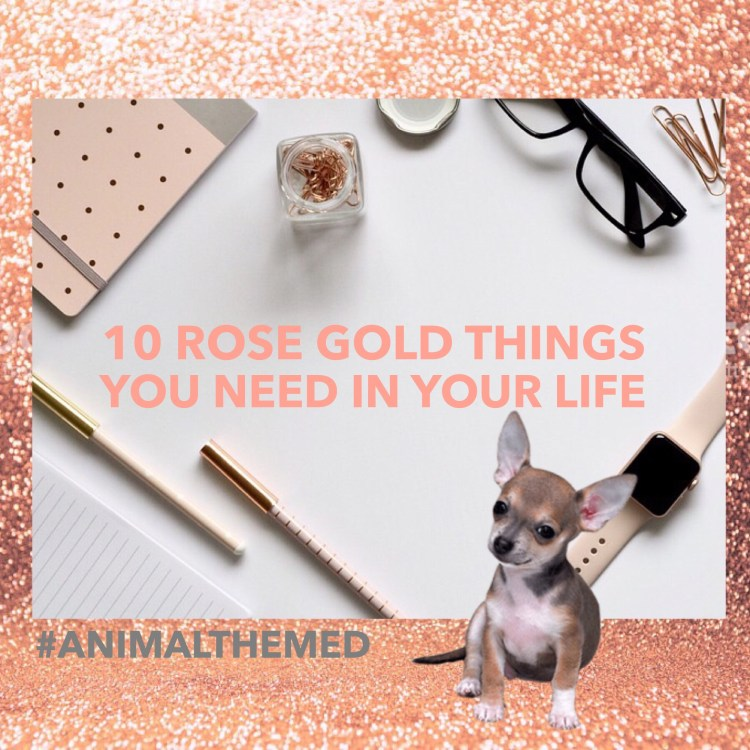 Ten things you need in your life if you love rose gold pet themed