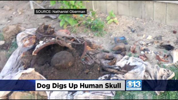 Forensic anthropology and archaeology in the news…and some strange stuff