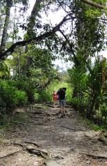 Rainforest footpath