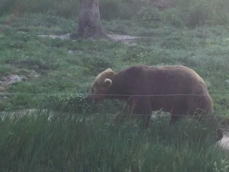 Bear o.o