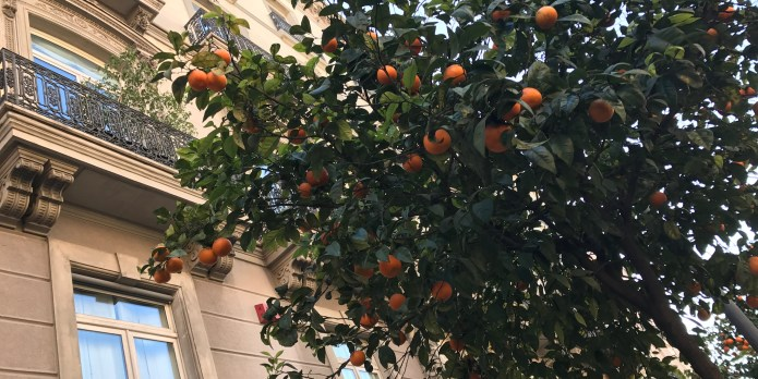 Can You Eat the Oranges Growing on the Streets of Valencia?