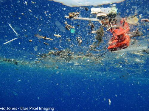 Plastic eating enzyme could beat ocean waste