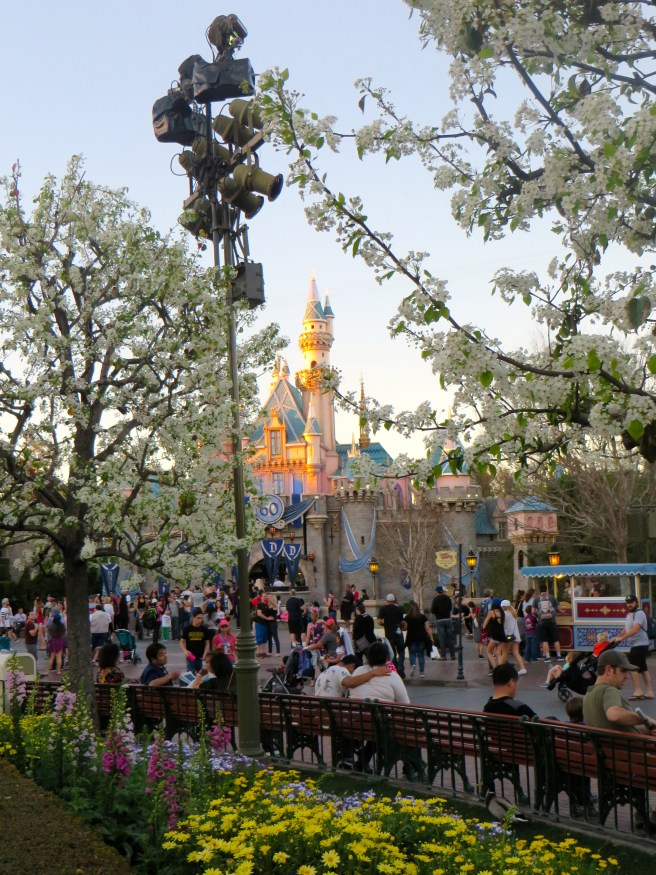 Disneyland 60 Travel Tips | The Rose Table