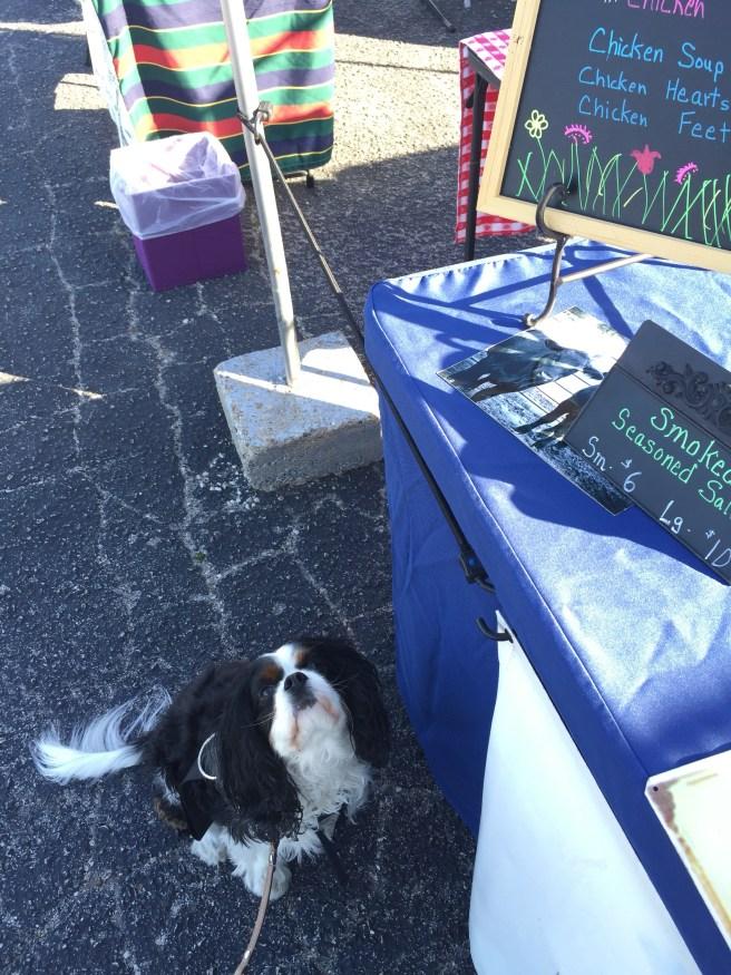 Gabby Cavalier King Charles Spaniel Farmers Market | The Rose Table