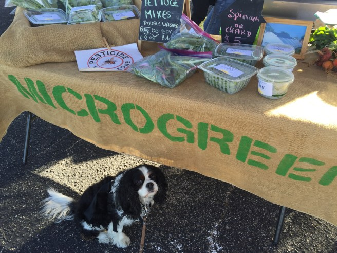Gabby at the Micogreens Stall | The Rose Table
