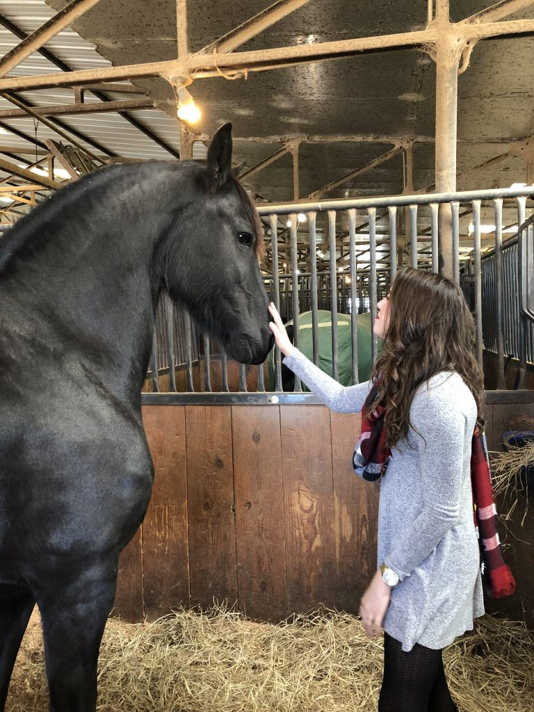 Horse Lifestyle Blog | The Rose Table
