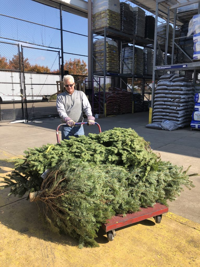 Best Christmas Tree Nordmann Fir | The Rose Table
