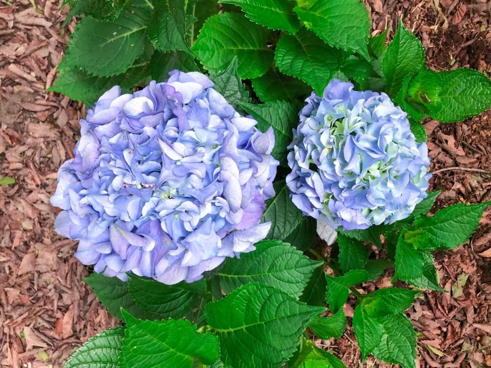Garden Blog Inspiration | The Rose Table