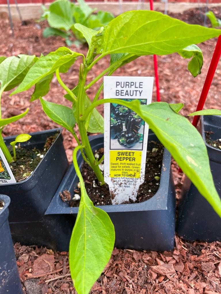 Summer Vegetable Garden Ideas