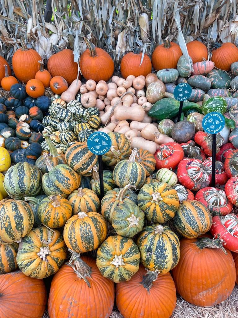 Dallas Arboretum Pumpkin Village 2021