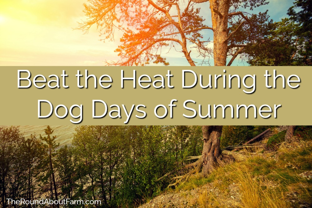 Beat the Heat During the Dog Days of Summer