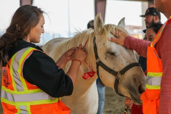 Makenna Kellogg tags horse evacuated to Pierce College's Large Animal Evacuation Center at the Equestrian Center in Woodland Hills, Calif. due to the Saddleridge Fire on Oct. 11, 2019. Photo by Cecilia Parada.