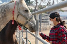 Sasha Corona feeds Pecas who was evacuated to Pierce College's Large Animal Evacuation Center at the Equestrian Center in Woodland Hills, Calif. due to the Saddleridge Fire on Oct. 11, 2019. Photo by Cecilia Parada.