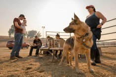 Evacuees from the Breezy Meadow Stables in Chatsworth have breakfast and coffee at the Pierce College Equestrian Center, on Friday, Oct. 11, 2019, in Woodland Hills, Calif. Coming from the same barn, they all took their horses with them and evacuated to Pierce before sunrise during the Saddleridge Fire. Photo by Kevin Lendio.