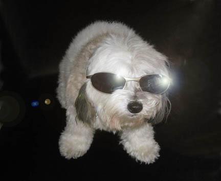 SunglassesDoubleFlared_sml