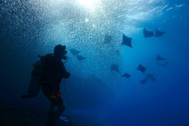 Me, surrounded by bait fish and mobula rays