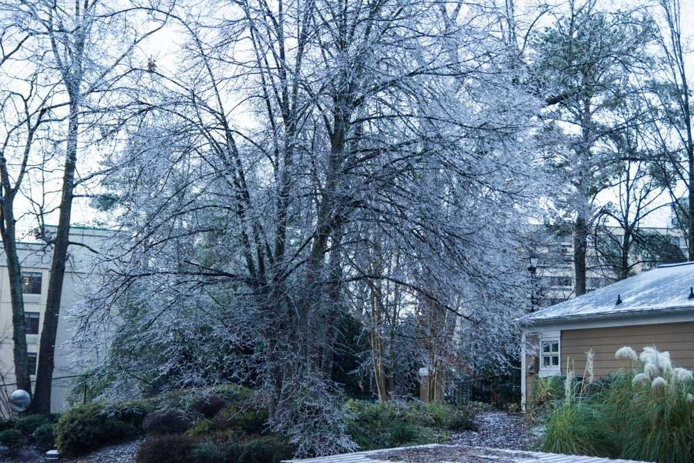 Atlanta winter storm - tree covered in ice.