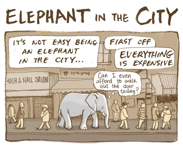 31 elephant 1