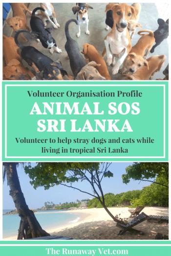 Animal SOS Sri Lanka - The Runaway Vet
