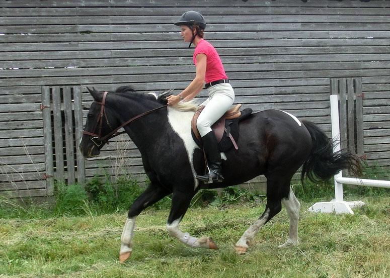 flexitarian ride
