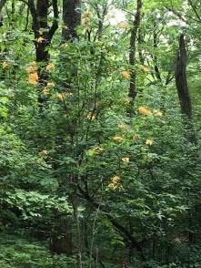 orangelfowers2
