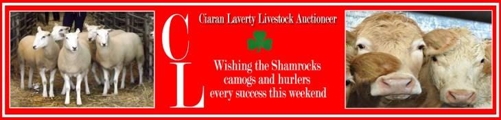 Ciaran Laverty advert copy2