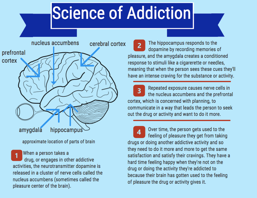Addiction+is+mainly+a+result+of+the+brain%27s+natural+response+to+a+feeling+of+pleasure+caused+by+dopamine.