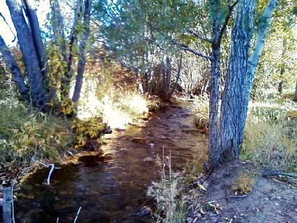 Year round creek on the property.