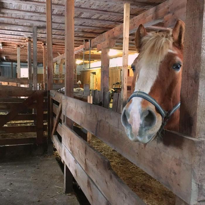 Familienchalets mit Hotelservice - Pferdestall