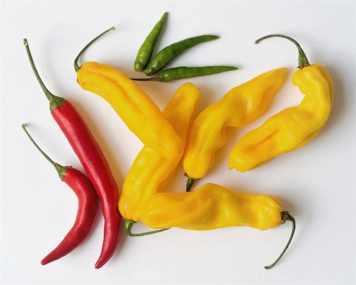 Hots of Hots of Chillies